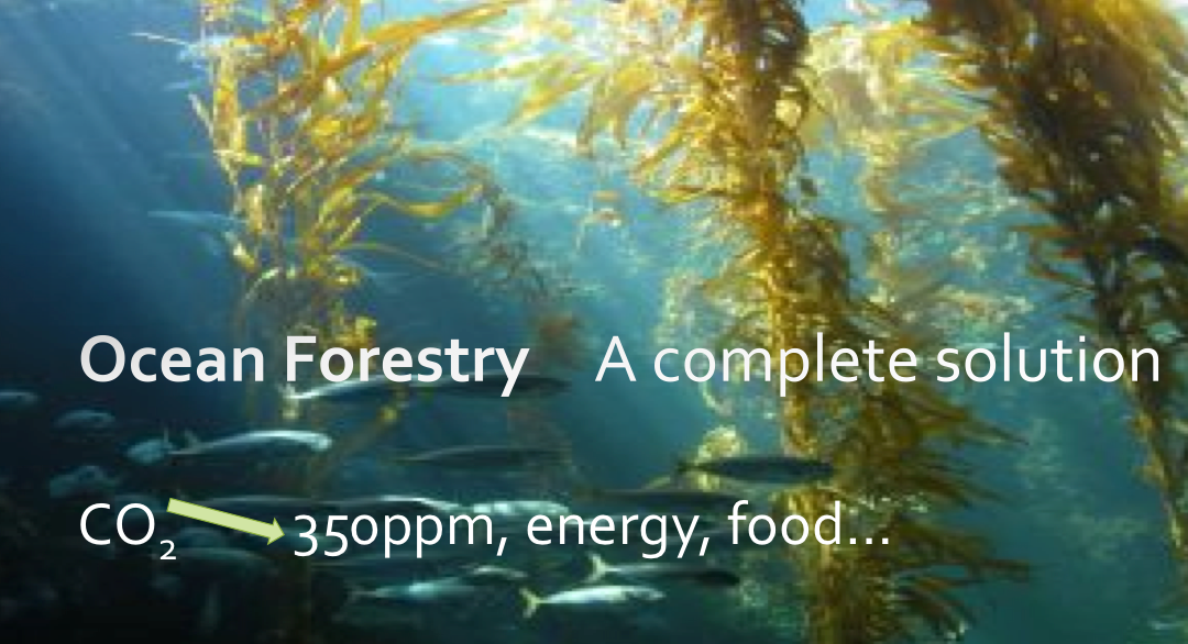 Managed Seaweed Forests: A Complete Eco-Solution